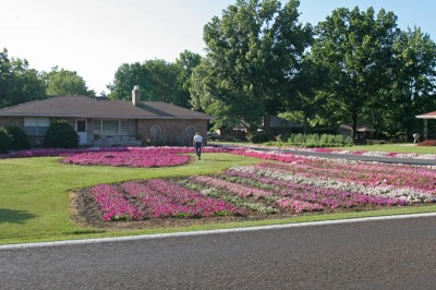 south-county-petunias-01